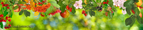 plakat image of fruits in a park closeup