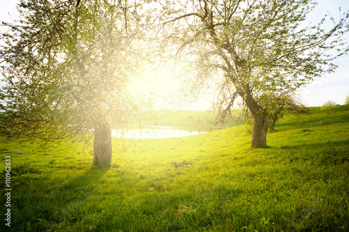 Fotobehang Zwavel geel landscape with tree