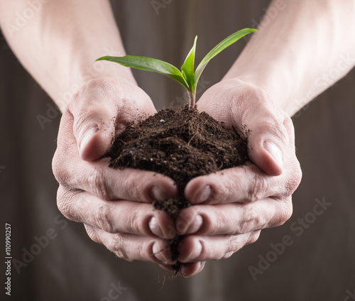 Garden Poster Plant Green sprout in soil
