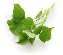 Sweet Potato Leaves On White B...