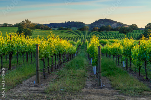 Stickers pour porte Vignoble Sunset in the vineyards of Sonoma
