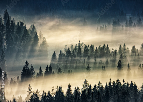 Poster Ochtendstond met mist coniferous forest in foggy mountains