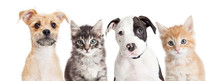 Horizontal Banner Of Cute Puppies And Kittens