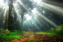 Scenery, Warm In The Forest With The Sun Rays And Refreshing Beautiful Of Fog And Trees.