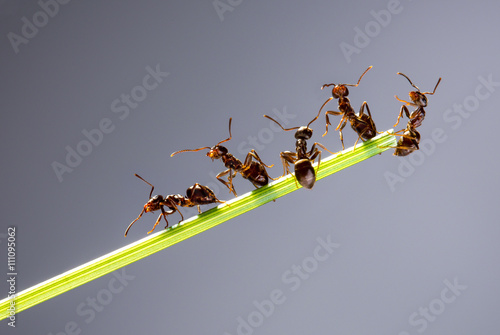 Team of ants. Wallpaper Mural
