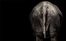 The Behind Of A Elephant, Tail Elephant, Elephant Rear View