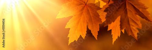Orange autumn leaves with lightrays