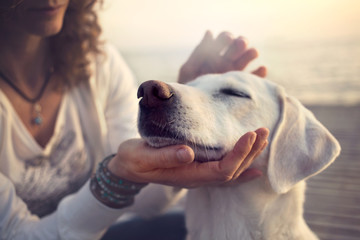 Fototapeta owner caressing gently her dog