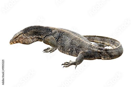 Komodo dragon (Varanus komodoensis) - Buy this stock photo