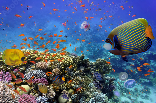 Fototapety, obrazy: Coral Reef and Tropical Fish in the Red Sea