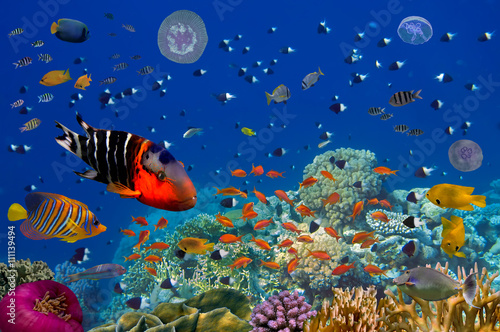 Poster Sous-marin Colorful reef underwater landscape with fishes and corals