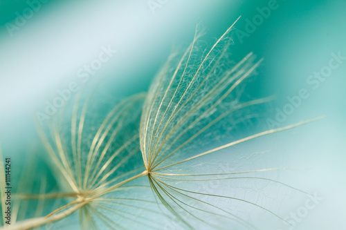 Macro of dandelion seed on abstract green background