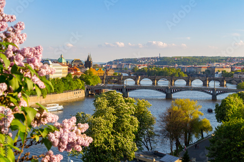 Photo  The blooming bush of lilac against Vltava river and Charles bridge, Prague
