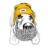 Fototapeta Dogs - Portrait of Basset Hound dog in a Hipster hat and with scarf. Vector illustration.