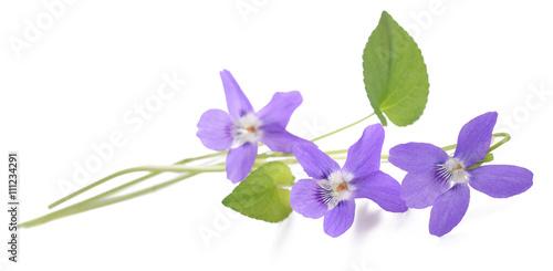 Papiers peints Pansies Violet