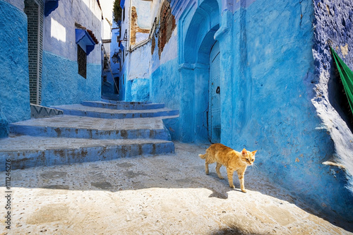 Papiers peints Maroc A cat in a street of Chefchaouen, in Morocco.