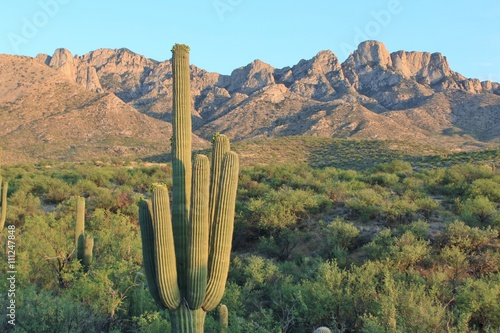 Staande foto Arizona Arizona Desert Mountains and Cactus Landscape