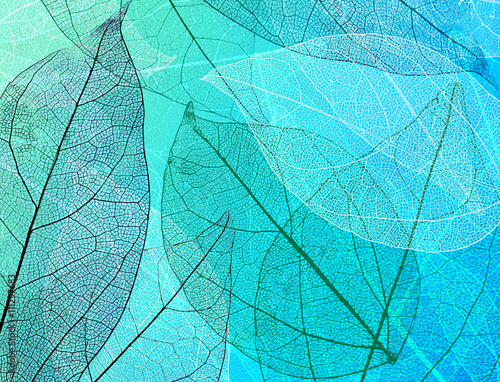 Poster Decorative skeleton leaves Beautiful abstract background with skeleton leaves