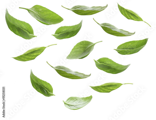 Fotografia  Set of fresh basil leaves isolated on white