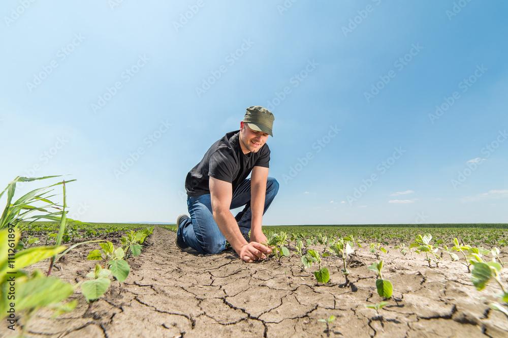 Fototapety, obrazy:  farmer in soybean fields