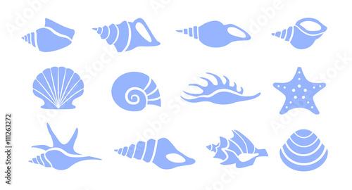 Photo Seashells