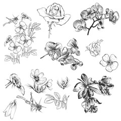 Collection of vector hand drawn floral elements in engraved styl