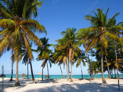 Papiers peints Zanzibar Palm trees on the beach, Zanzibar