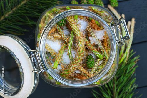 Fototapeta Pine sprouts syrup obraz