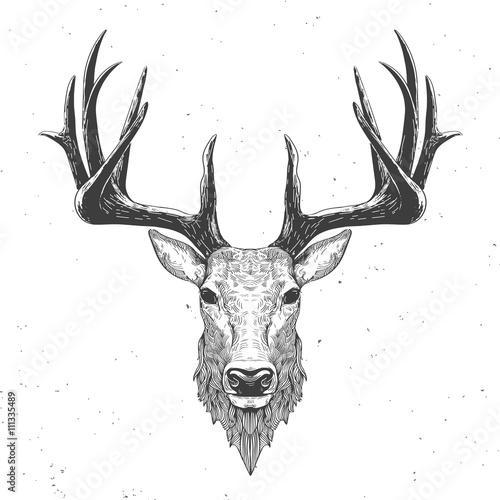 glowa-jelenia-z-rogami-rysowana-biale-tlo