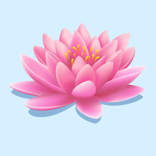 Pretty Pink Water Lily Or Lotus Flower