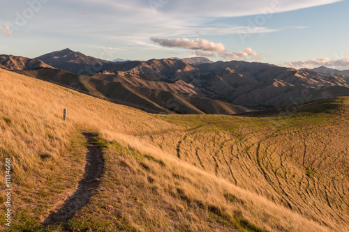 Tuinposter Heuvel hiking track across grassy slopes at Wither Hills in New Zealand