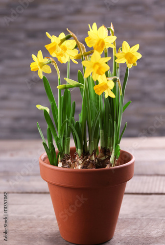 Deurstickers Narcis Beautiful narcissus in pot on table