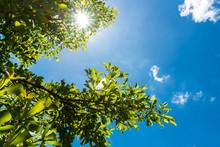 Green Leaves Against Blue Sky