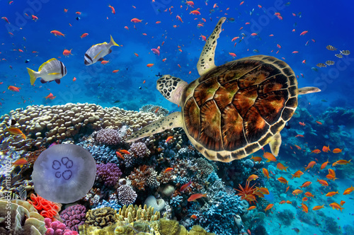 Poster Schildpad colorful coral reef with many fishes and sea turtle