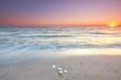 Muscheln am Ostseestrand zum Sonnenaufgang