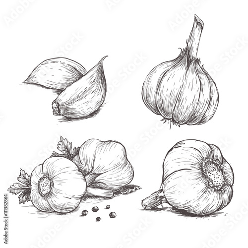 Fotografía  Vector hand drawn set of garlic