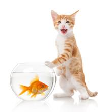 Cat And An Aquarium With Fish