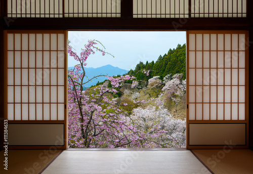 Tuinposter Japan Japanese sliding doors and beautiful landscape of cherry trees in spring