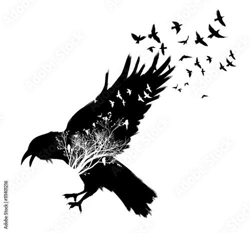 Obraz na plátně Raven double exposure.