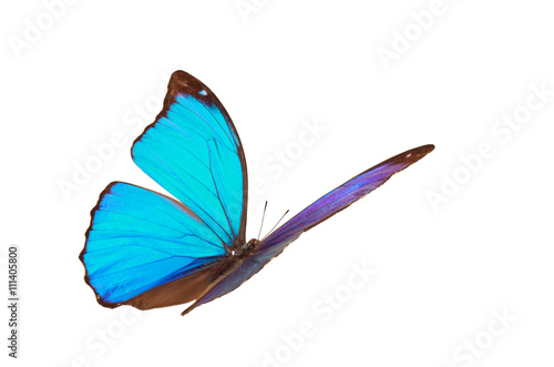 Fotografie, Obraz  Blue tropical butterfly.