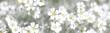 Leinwandbild Motiv white spring flowers