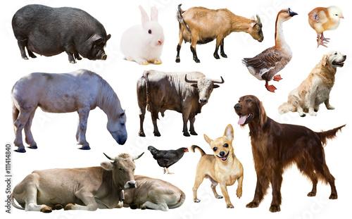 einzelne bedruckte Lamellen -  farm animals. Isolated over white (von JackF)