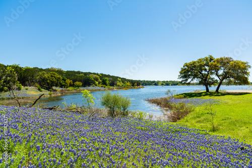 Foto op Plexiglas Texas Bluebonnets