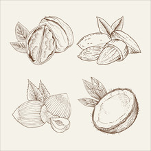 Vector Set Of Nuts In Woodcut ...