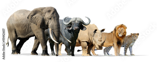 Photographie  Big five game isolated on white