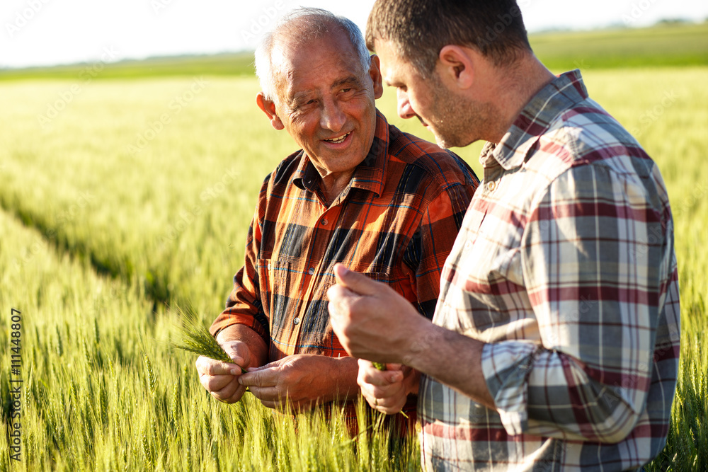 Fototapety, obrazy: Two farmers in a field examining wheat crop.