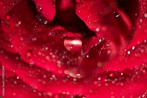 In de dag Dahlia pink casablanca