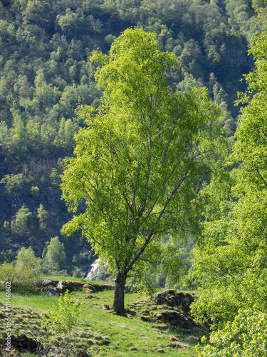 Staande foto Scandinavië Flam in Norwegen