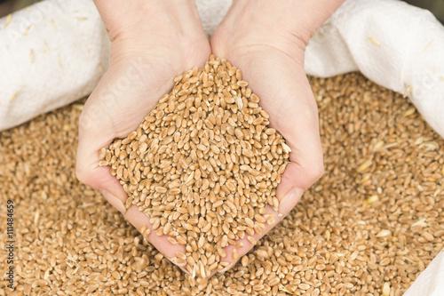 Zwei Hände schöpfen Getreide aus einem Getreidesack