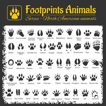 Animal Tracks - North American...